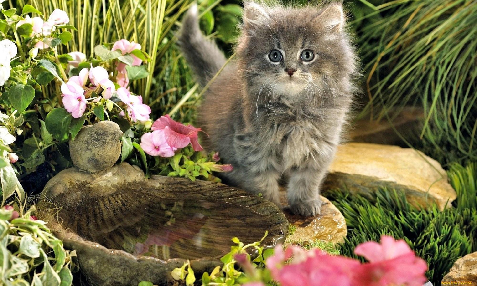 гагрипш фотообои коты с цветами тут том, что